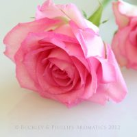 Candle - Simply Soy Jar - Rose
