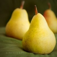 Candle - Simply Soy Jar - Pear